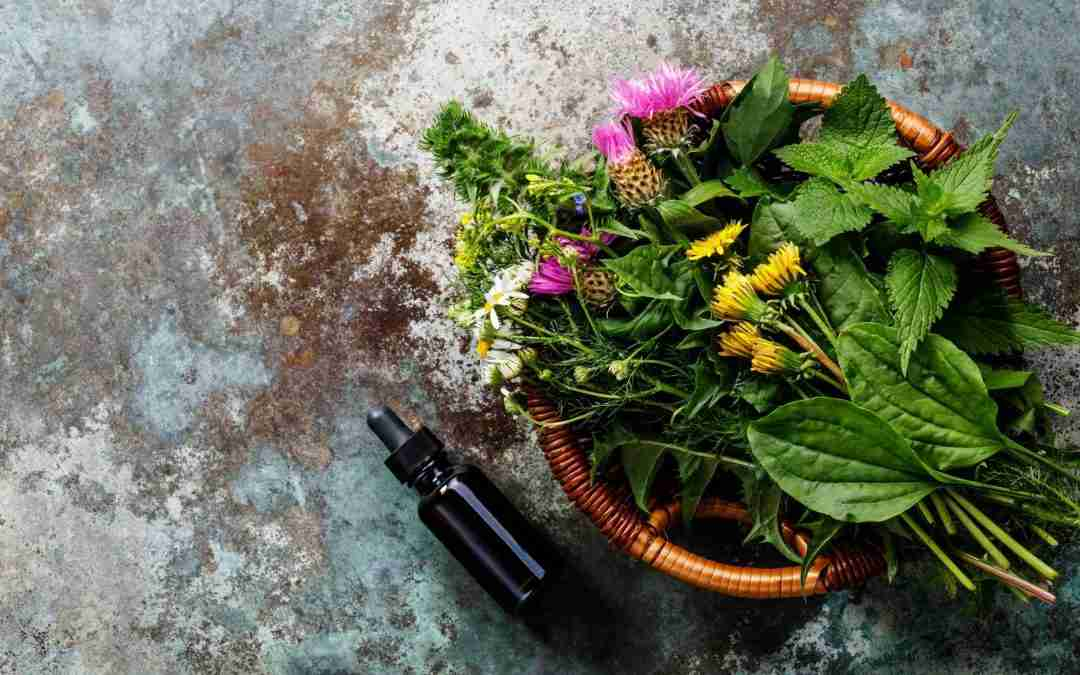 How to Use the BioRay Herbal Tinctures Line For The Best Health Benefits