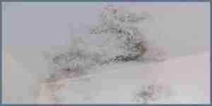 mold illness mycotoxin testing